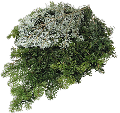 Silver Fir Bunched Greens