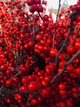 Winterberry Bunched Stems
