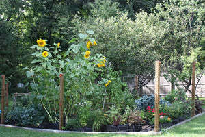 A SEASONED GARDENER KNOWS AND GROWS 'A BIT OF EVERYTHING'