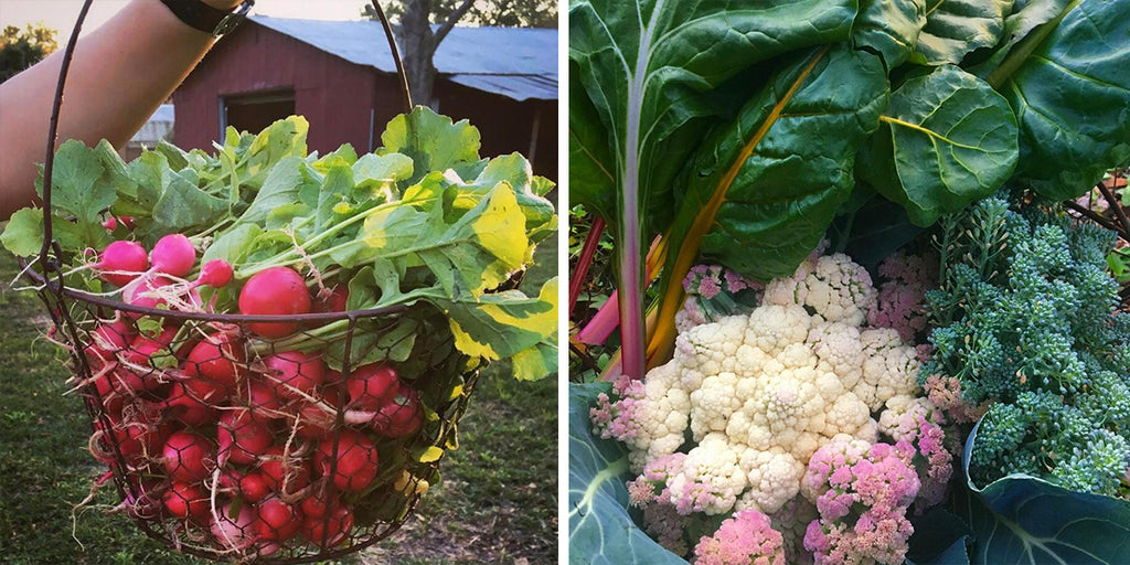 GROW INSPIRED: HOMESTEADING IN CENTRAL FLORIDA