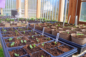 OUR FAVORITE GARDEN TIPS FROM TERRITORIAL SEED