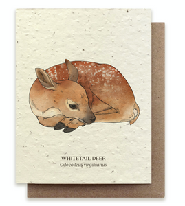 Whitetail Deer Plantable Card