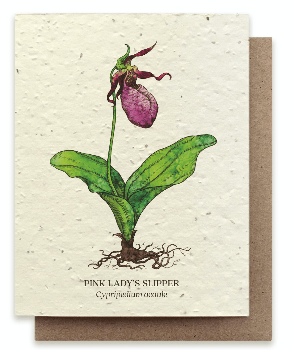 Lady's Slipper Plantable Card