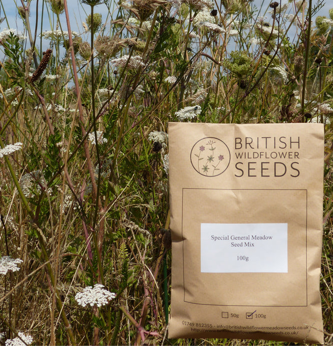 A Quick Introduction to Wildflower Seed Mixes
