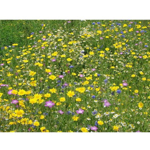 Cornfield Annuals Seed Mix