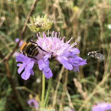 Load image into Gallery viewer, Bee Wildflower Seed Mix