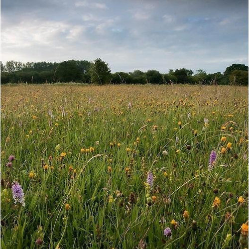 Wiltshire Flood Plain Meadow Seed Mix