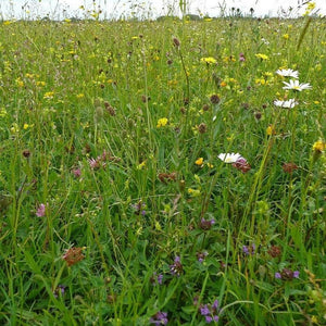 Cotswold Flood Plain Meadow Seed Mix