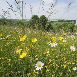 Somerset (North) Meadow Seed Mix
