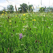 Welsh Borders Meadow Seed Mix (On Hold)