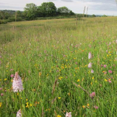 Welsh Meadow Seed Mix