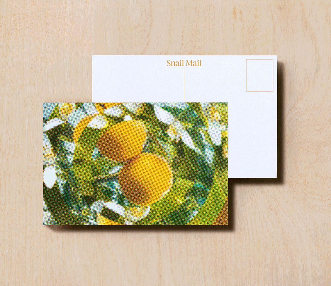 Snail Mail Postcard  - Naps in the Grove