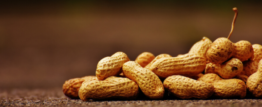 The Quick Beginner's Guide to Understanding Food Allergies