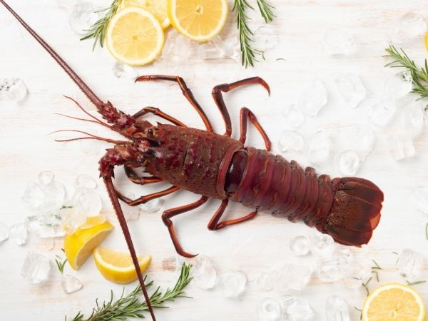 Live Whole California Spiny Lobster