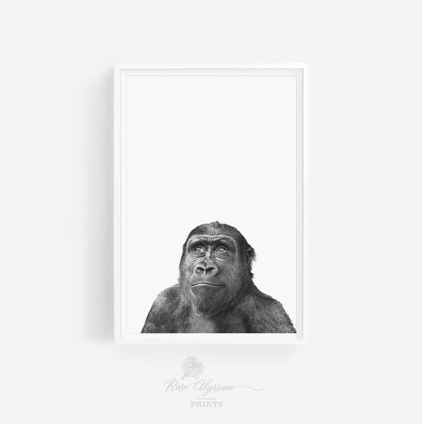 Thinking chimpanzee print art, meditating chimp wall poster - P0001