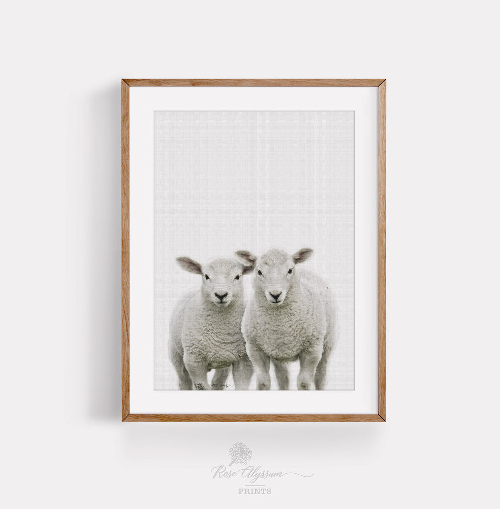 Baby twin sheep print art - P0026