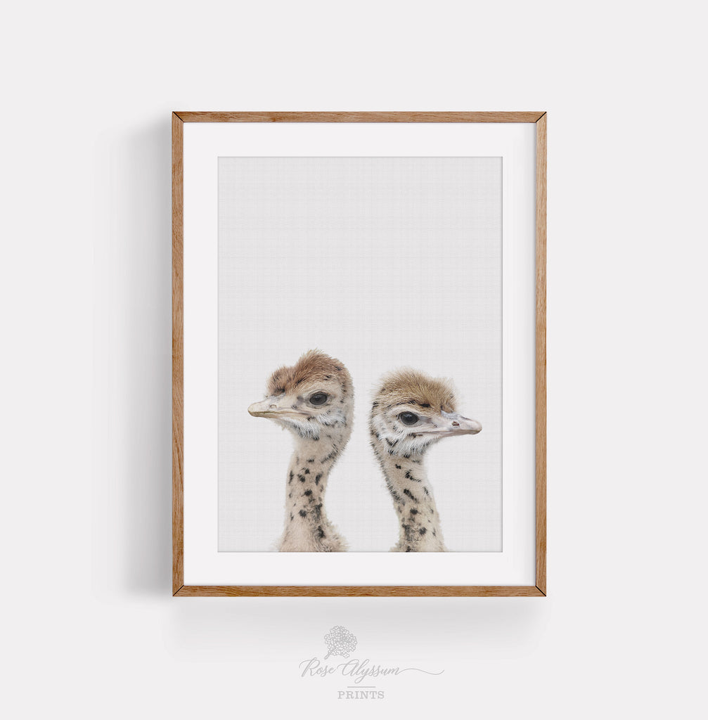 Twin baby ostrich art photo, twin ostrich baby print art, twin animal digital download - P0038