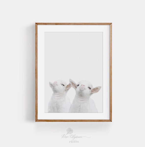 Baby goat brother print art, twin baby goat wall art - P0041