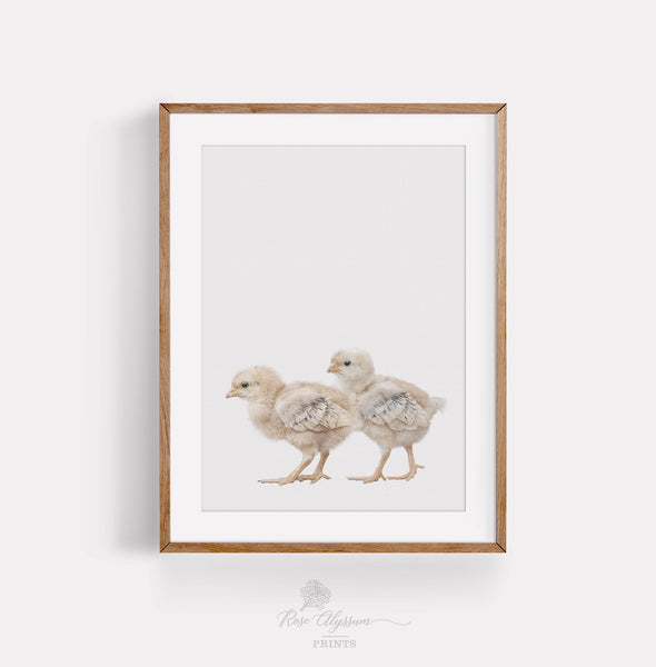 Twin chicken print art, baby twin chicken digital download - P0043