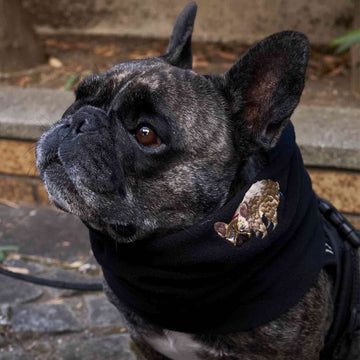 F/B POOPING NECK WARMER【FRENCH BULLDOG LIFE × PEGION】