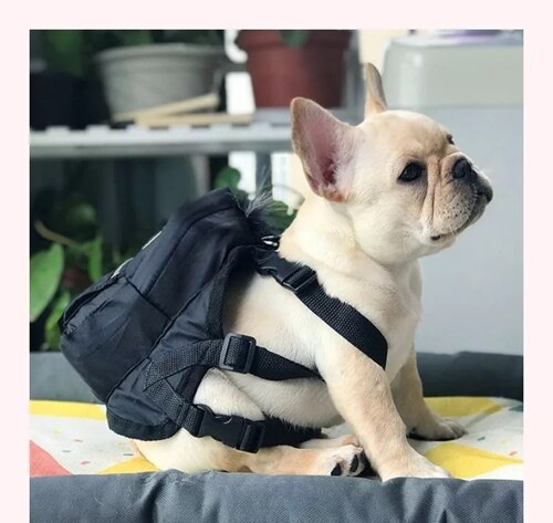 French Bulldog Backpack with Leash
