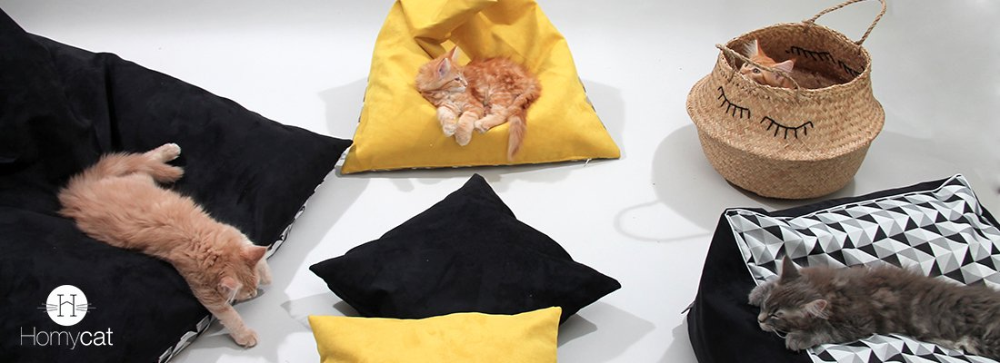 homycat chaton chat pouf coussin