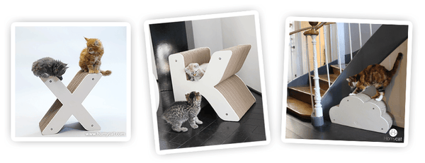 chat-chaton-griffoir-homycat-article