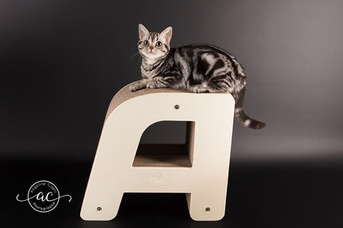chaton-griffoir-design-photo-angeline-capri-homycat