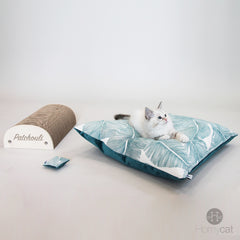 Kit chatons homycat - Je l'aime beaucoup