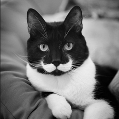 moustache-chat-pelage