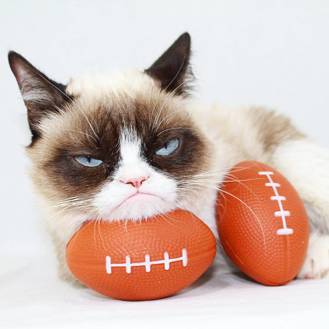 real-grumpy-cat-instagram