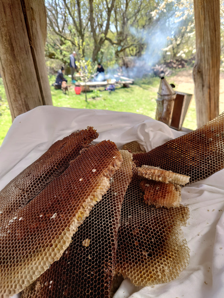 Beeswax from the tree hive