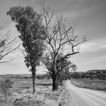 'TreeLine' Dusty Road Black & White Photographic Print