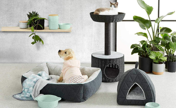 Best Pet Items on the Market (That Your Pet Wants & Needs!)