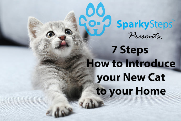 How to Introduce a Cat to a New Home