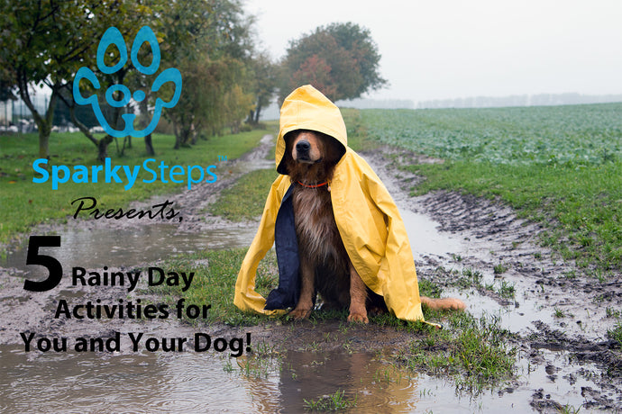 Five Rainy Day Activities For You and Your Dog