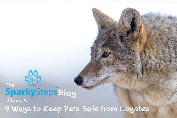 9 Ways to Keep Pets Safe from Coyotes