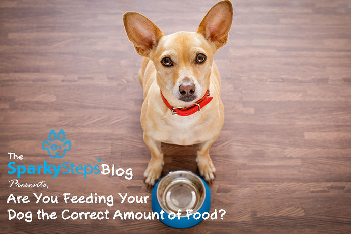 Are You Feeding Your Dog the Correct Amount of Food?