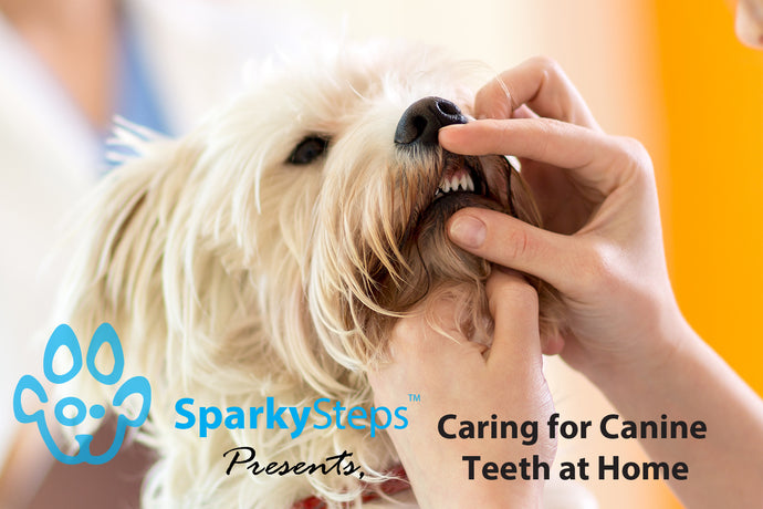 Caring for Canine Teeth at Home