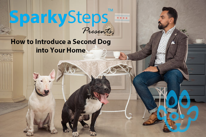 How to Introduce a Second Dog into Your Home