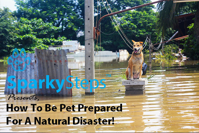 How to Be Pet Prepared for a Natural Disaster