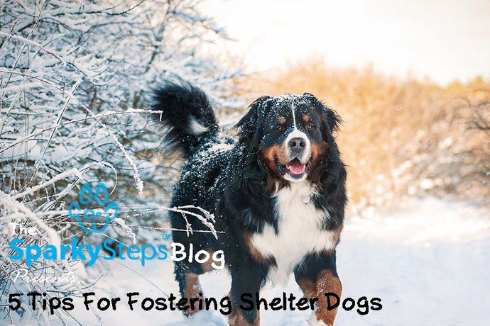 5 Tips For Fostering Shelter Dogs