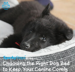 Choosing the Right Dog Bed to Keep Your Canine Comfy