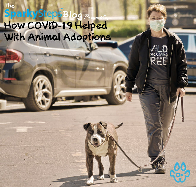 How COVID-19 Helped With Animal Adoptions