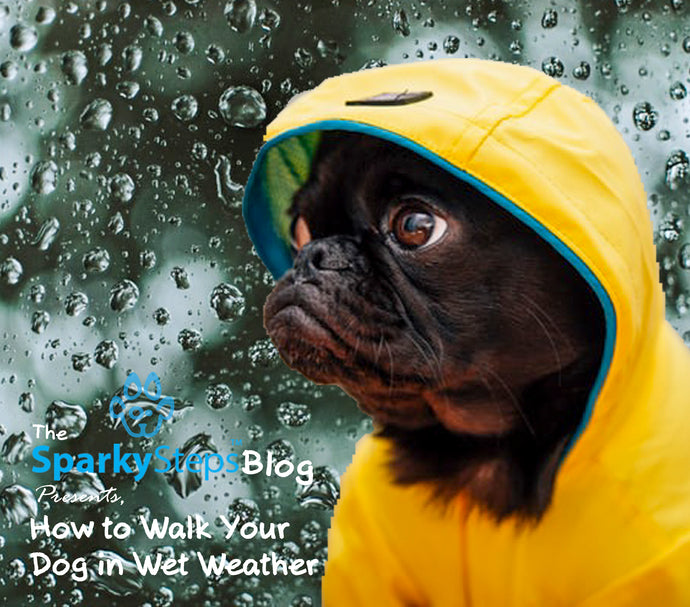 How to Walk Your Dog in Wet Weather