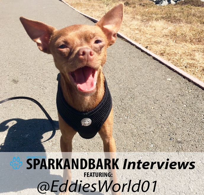 Interview With EddiesWorld01