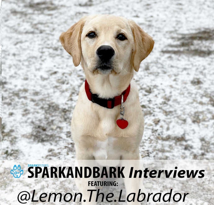Interview With @Lemon.The.Labrador