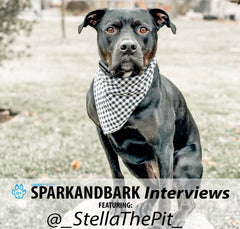 Interview With @_StellaThePit_