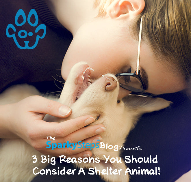 Three Reasons You Should Consider A Shelter Animal