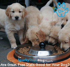 Are Grain Free Diets Good for Your Dog?